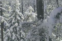 35-Snow-covered-trees