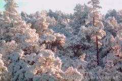 8-Snow-covered-trees